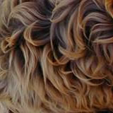 labradoodle colour fleece